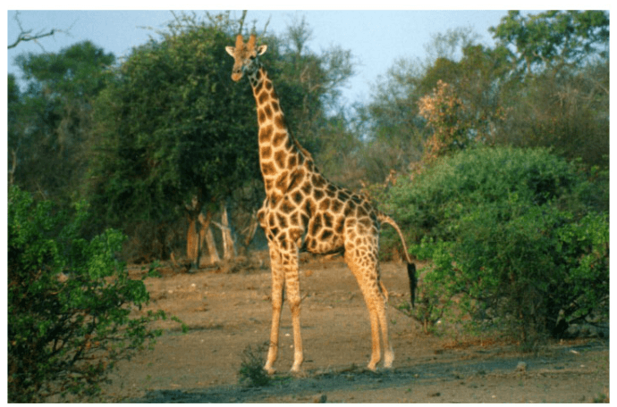 Animalia – Guess Animals from Around the World and Have Fun Learning About the Animal Kingdom! Free – Level Pack 3 – Puzzle 6