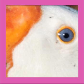 Quiz Pic – Close Ups – Level 1 – Puzzle 11