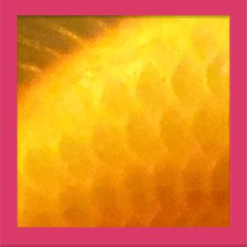 Quiz Pic – Close Ups – Level 1 – Puzzle 2
